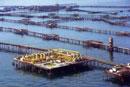Oil Rocks - Wonder of the Industrial World