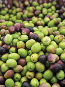 Liquid Gold from Olive Groves