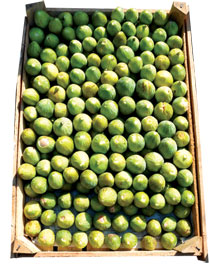 Figs - Better fresh than dried
