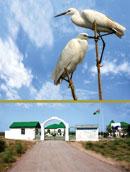 Azerbaijan's Ag Gol – 'White Lake' a haven for birds