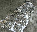 Mass Grave Found in Northern Azerbaijan