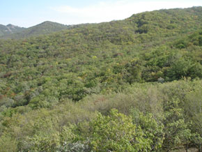 Altiaghaj forests