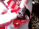 PAWS-Baku's own animal welfare charity