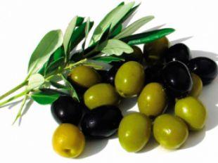 Olive Industry in Azerbaijan