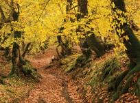 Autumn in Oghuz