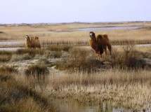 Azerbaijan's National Parks