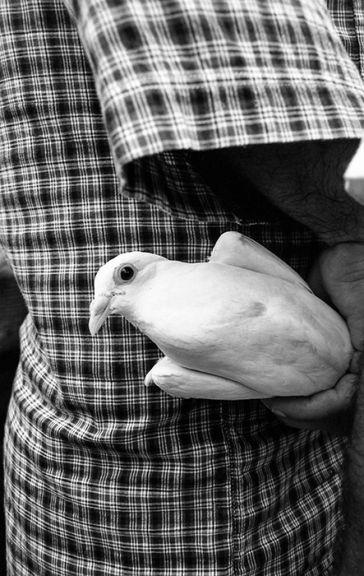 Pigeon bazaar, 2014