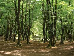 Oghuz forest