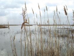 Lake in Shirvan Park in summer