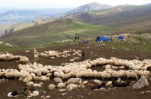 A shepherd's camp in Quba