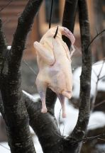 The turkeys are salted and hung in the winter frost for one day before being used to prepare kebabs