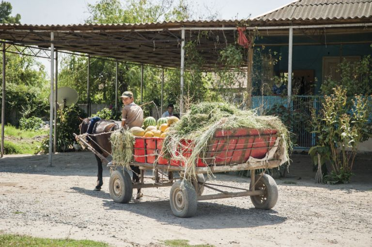 The melons are still transported from the fields to the bazaar by horse and cart